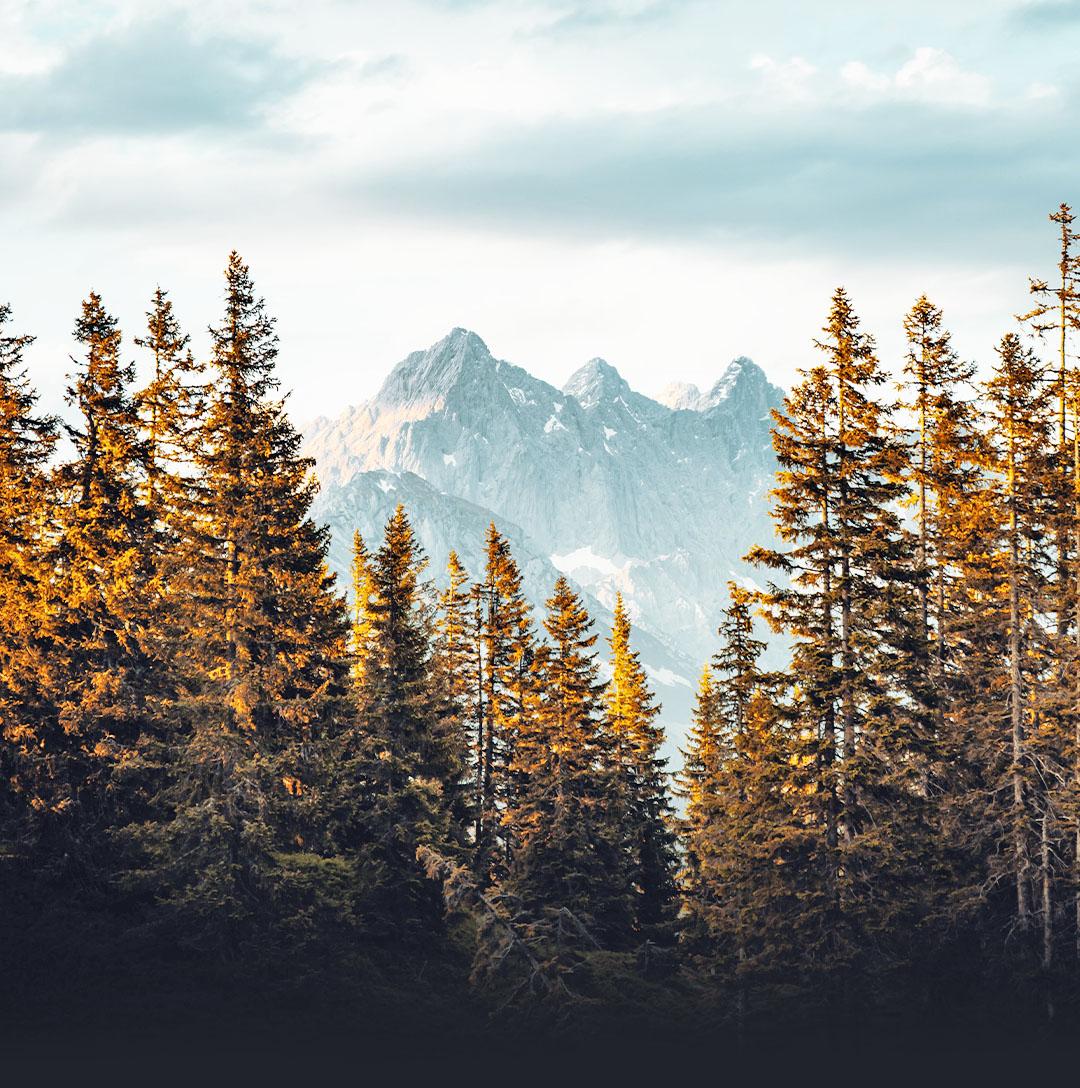 Pohon di depan gunung